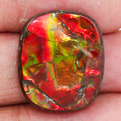 22.45 Cts AAA+ Genuine Canadian Ammolite Loose Gemstone Free Shipping MGS961