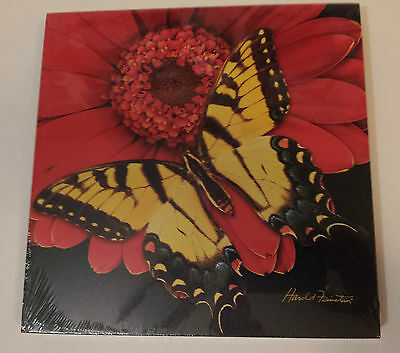 Canvas Art Print, New Yellow Monarch Butterfly, Signature Collection