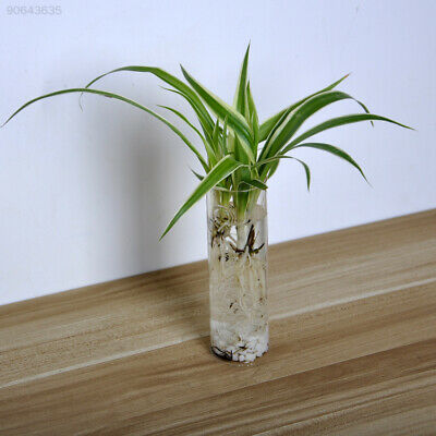 8A0D Home Clear Cylinder Glass Flowerpot Mini Wall Hanging Water Plant Vase