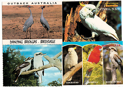 Australia. 4 Native Birds Postcards in Great Condition