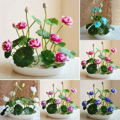 New Nice Adorable Flower Fragrant Blooms Colorful Lotus Seeds BE0R