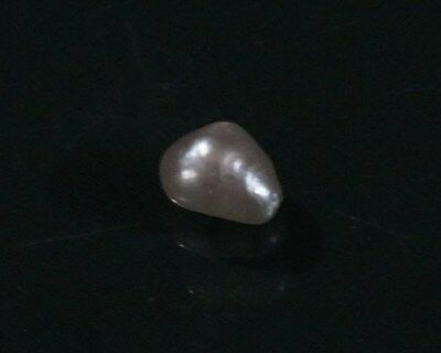 PINCTADA MARGARITIFERA 10 mm  x 7.5  mm  hard to collect this  pearl