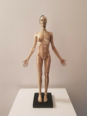 mid 20th century anatomical model of a female with magnetic parts.