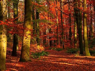 Digital Picture Image Photo Wallpaper JPG Autumn Desktop Screensaver