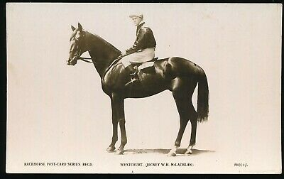 Horse racing Postcard Westcourt WH McLachlan The Rose Racehorse Post Card Series