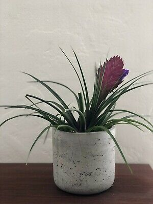 Concrete Mix Modern Planter Plant Pot Mid Century Decor