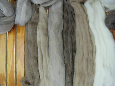 Wool WA Natural coloured Dreamee Tops Roving 100gm. Spin Felt Dye Knit