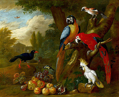 Two Macaws a Cockatoo and a Jay with Fruit by Bogdani Jacob A1 Canvas Print