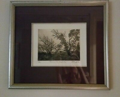 Framed Drawing of Trees on Mt Canobolas by Pamela Griffith - 46cm x 41cm