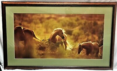 """All the Pretty Horses"" Photographic Poster by David Steocklein in 45x25 Frame"