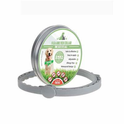 1 Pack Flea and Tick Control Adjustable Waterproof Collar Protect for Dogs Cats