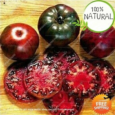 Black Tomato Vegetable Seeds Plants And Fruit Organic Of Perennial As 200pcs