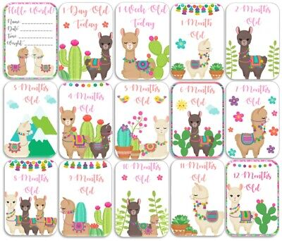 Llama Themed Baby Age Milestone Cards. Pack of 15. Baby Shower Gift. Mum to Be.