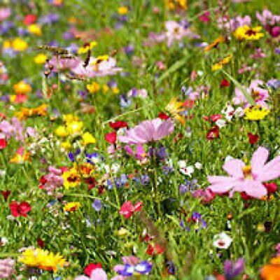 400 Wild Flower Seeds Scented Bee Mixed Meadow No Grass