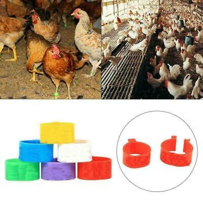 100PCS 16mm Clip On Leg Band Rings for Chickens Ducks Hens Poultry Large Fowl