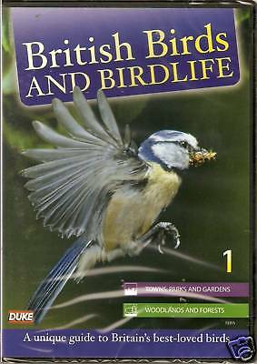 British Birds And Birdlife 1 Towns, Parks & More