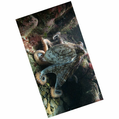 EG_ 150x130cm 3D water repellent Tapestry Marine Life Series Octopus Pattern Caf