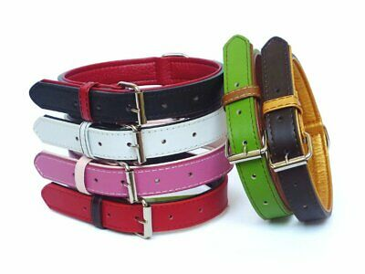 Fusion Leather Dog or Puppy Collar Lead available separately **FREE POSTAGE**