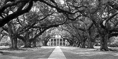 Oak Alley Plantation by Britt Johnson Signed and Numbered 15 x 31 B&W