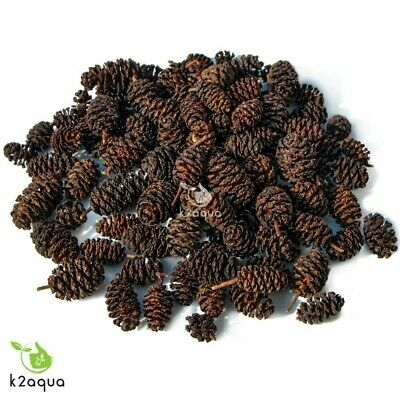 Alder Cones For Aquarium Use Natural Water Treatment Good Decoration and Food UK