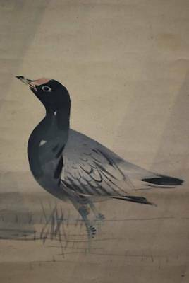 JAPANESE PAINTING HANGING SCROLL JAPAN BIRD ORIGINAL ANTIQUE PICTURE OLD 204i