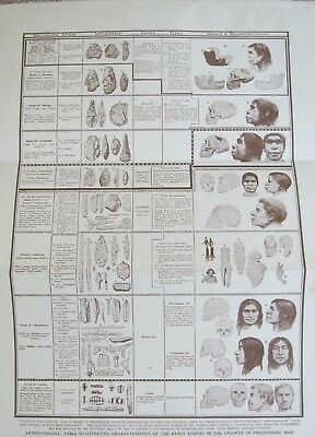 Anthropology Characteristics Changes Growth Of Prehistoric Man  Antique Print