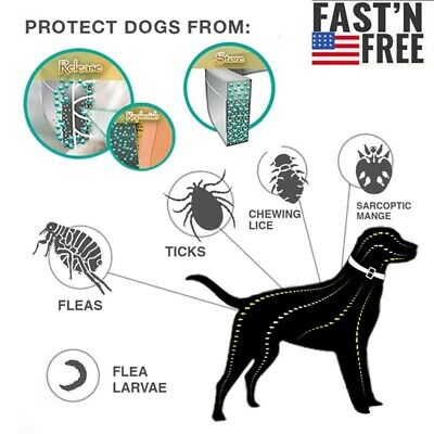 Flea and Tick Collar for Small Pet Cats Dog Anti Insect 8 Month Protection