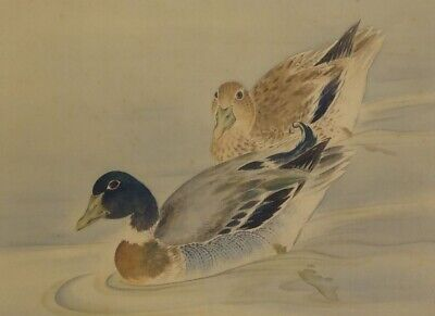 JAPANESE PAINTING Bird HANGING SCROLL JAPAN Picture DUCK ANTIQUE VINTAGE d259