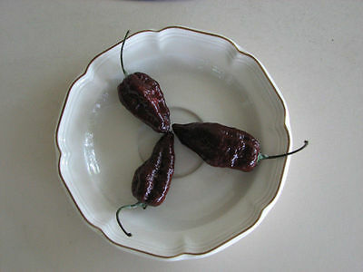 Chocolate Ghost Pepper Seeds(Naga Jolokia, Bhut Jolokia) 27 SEEDS