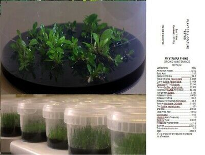 PHYTAMAX P1056 Sowing seedling Vitro Transplant Trapianto Orchidee ORCHIDS SEEDS