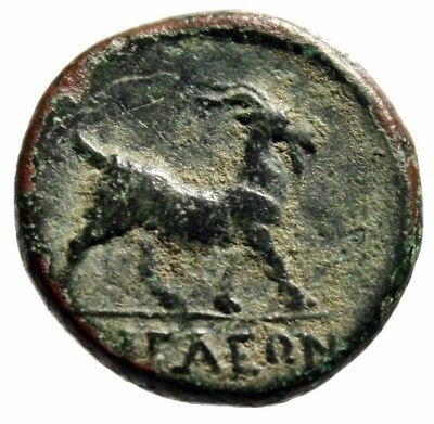 "Aeolis, Aegae AE16 ""Apollo & Goat Walking Right"" 2nd-1st Centuries BC Near EF"