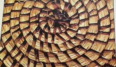 Weaving with Raffia Cane and Willow Coiled Mats Pattern  Reproduced