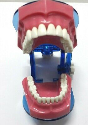 Teeth Model Typodont Jaw Set Education Study For Adult API