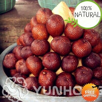 Snake Fruit Bonsai Seeds Plants Healthy Delicious Miracle For Home Rare 20pcs