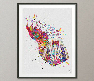 Molar Tooth Section Diagram Watercolor Print Human Teeth Dental Office Gift-1237