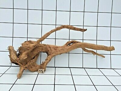 Red Moor Aquarium Wood Root Size Xxl (Iwagumi Aquascaping Bogwood Driftwood)