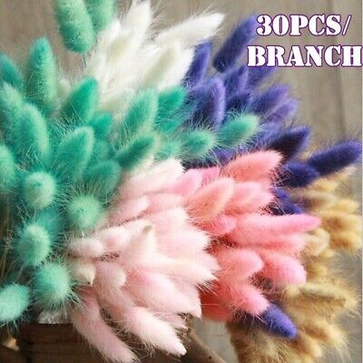 30Pc Natural Dried Flower Colorful Lagurus Ovatus Real Rabbit Tail Grass Bouquet