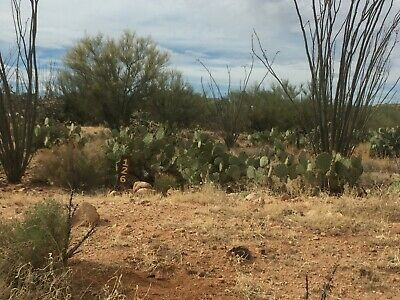 Tucson Arizona Vacant Land, Diamond Bell Ranch, Three Point   - Cash Sale