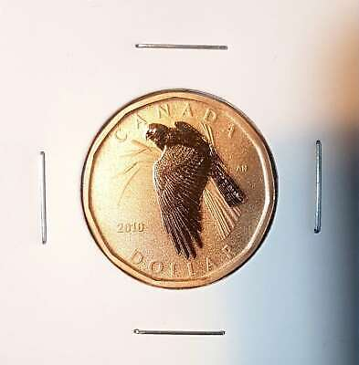 2010 $1 Canada - Specimen Northern Harrier Loonie Dollar - Uncirculated from Set