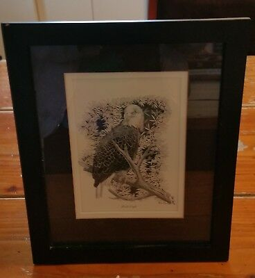Framed and Matted  Pen/Ink Drawing of a  Bald Eagle