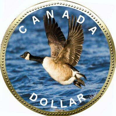 2019 Canadian Coloured Loonie Legal Tender Coin
