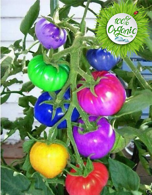 200pcs Seeds Tomato Multicolor Edible Tomato Vegetable Plants Pot Home Garden