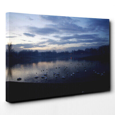 Canvas Wall Art Picture Print White Swans on a Lake (1)