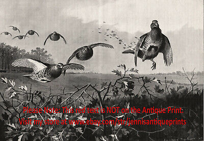 Firearms Grouse Hunting Moment of Kill Good Shot, Large 1890s Antique Print