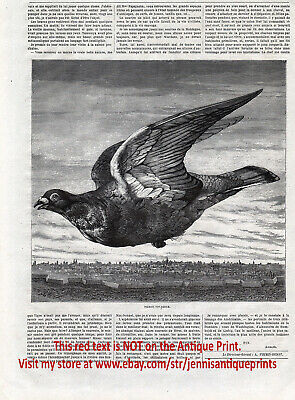 Bird Homing Pigeon Messenger Flying Over City, 1870s Antique Engraving Print