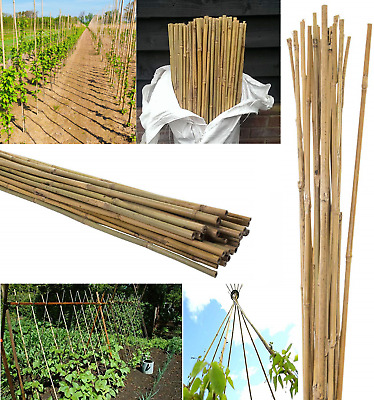 5ft Strong Bamboo Canes Plant Vegetables Support Garden Cane Stake 10-12mm Thick