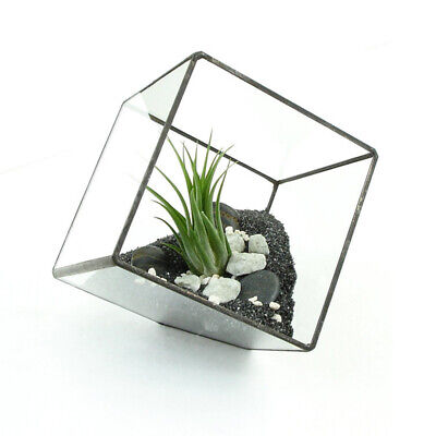 Irregular Glass Geometric Terrarium Box Tabletop Succulent Plants Planters Case