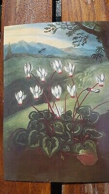 The Temple of Flora by Robert Thornton - The Persian Cyclamen Postcard Print