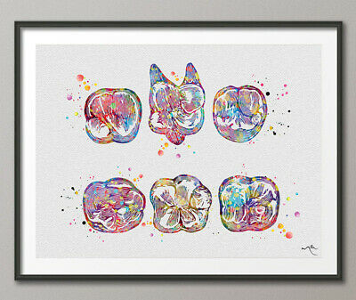Surfaces Molar Teeth Tooth Watercolor Print  Clinic Dentistry Office Dental Art