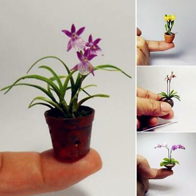 Perennial Mini Orchid Flower Seeds Home Decoration Indoor Plants C1MY
